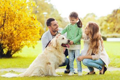 Die Hundehalterhaftpflicht im Versicherungsvergleich